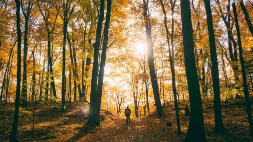 Романтичні фотосесії у золотому листі чи пікнік: 6 найкращих парків неподалік від Києва